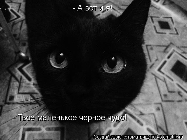 Котоматрица: - А вот и я! - Твое маленькое черное чудо!