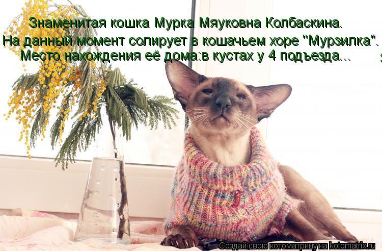 """Котоматрица: Знаменитая кошка Мурка Мяуковна Колбаскина. Знаменитая кошка Мурка Мяуковна Колбаскина. На данный момент солирует в кошачьем хоре """"Мурзил"""