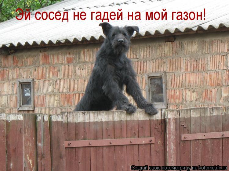 Котоматрица: Эй сосед не гадей на мой газон!