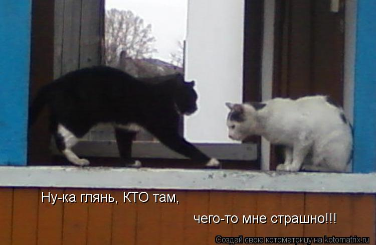 Котоматрица: Ну-ка глянь, КТО там,  чего-то мне страшно!!!