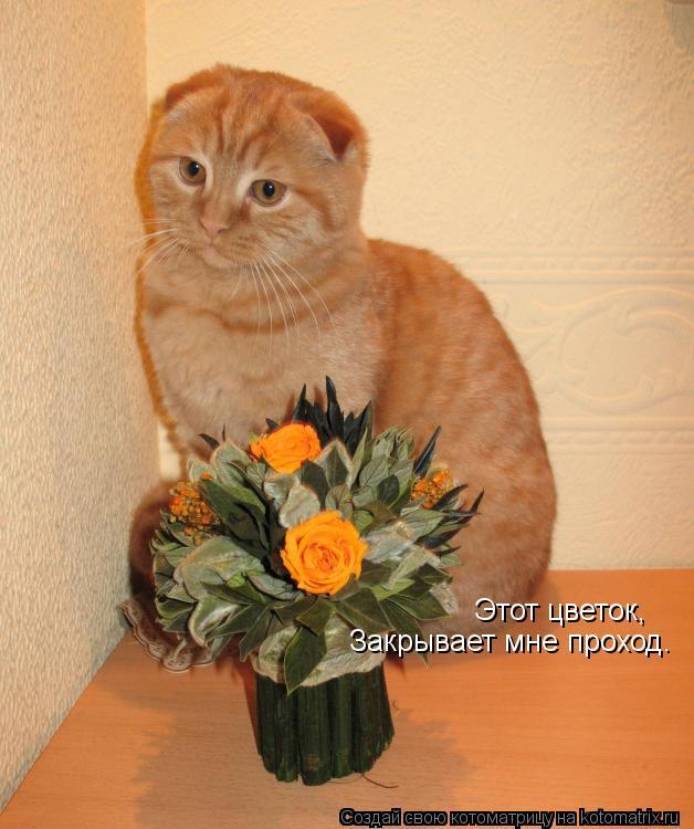 Котоматрица: Этот цветок Этот цветок, Закрывает мне проход.