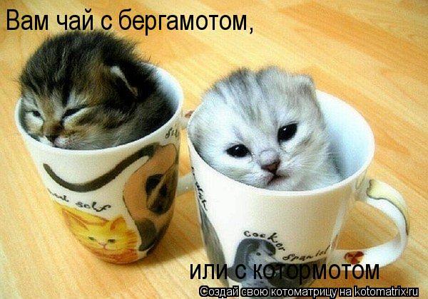 Котоматрица: Вам чай с бергамотом, или с котормотом