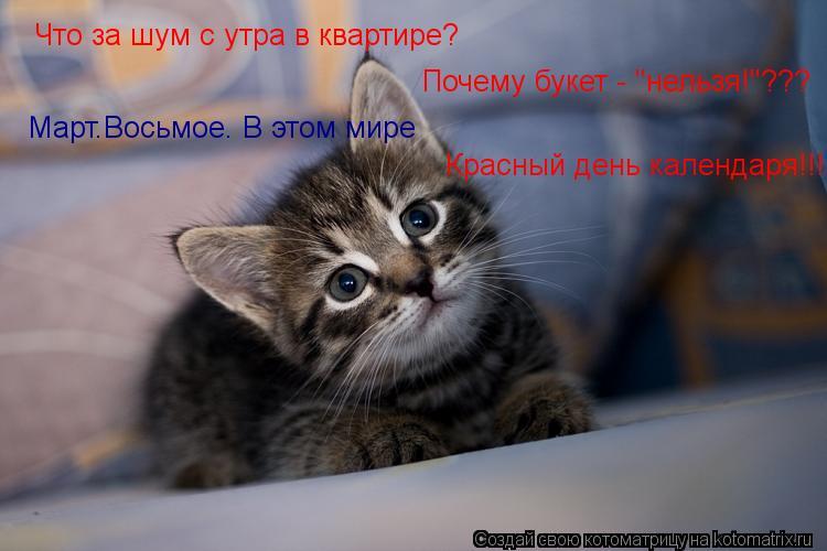 """Котоматрица: Что за шум с утра в квартире? Почему букет - """"нельзя!""""??? Март.Восьмое. В этом мире Красный день календаря!!!"""