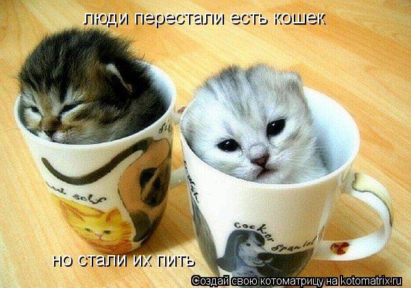 Котоматрица: люди перестали есть кошек но стали их пить