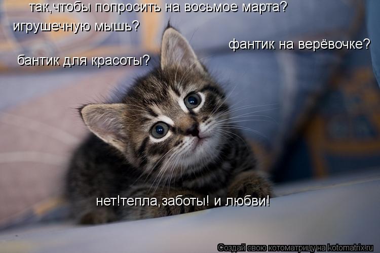 Котоматрица: так,чтобы попросить на восьмое марта? игрушечную мышь? фантик на верёвочке? бантик для красоты? нет!тепла,заботы! и любви!