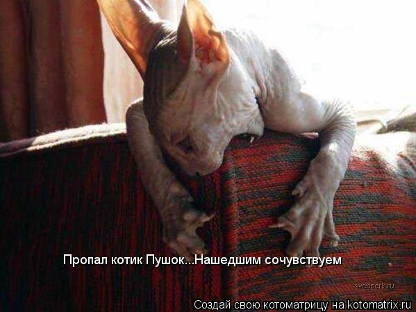 Котоматрица: Пропал котик Пушок...Нашедшим сочувствуем