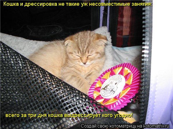 Котоматрица: Кошка и дрессировка не такие уж несовместимые занятия:  всего за три дня кошка выдрессирует кого угодно!
