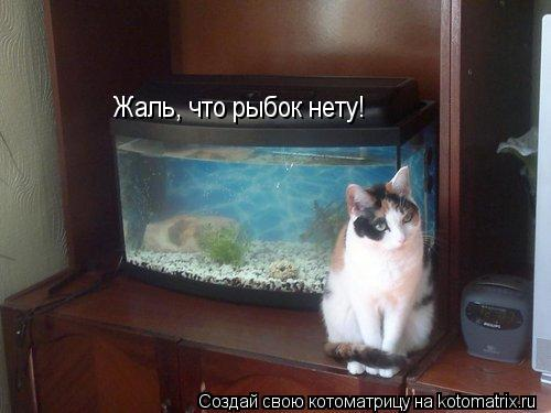 Котоматрица: Жаль, что рыбок нету!