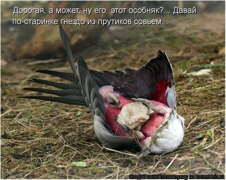 Котоматрица - Дорогая, а может, ну его, этот особняк?... Давай  по-старинке гнездо и