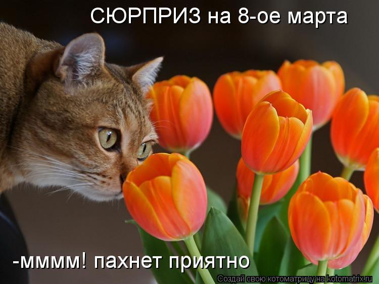 Котоматрица: СЮРПРИЗ на 8-ое марта -мммм! пахнет приятно