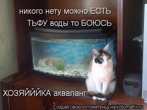 Котоматрица: никого нету можно ЕСТЬ ТЬФУ воды то БОЮСЬ ХОЗЯЙЙЙКА акваланг