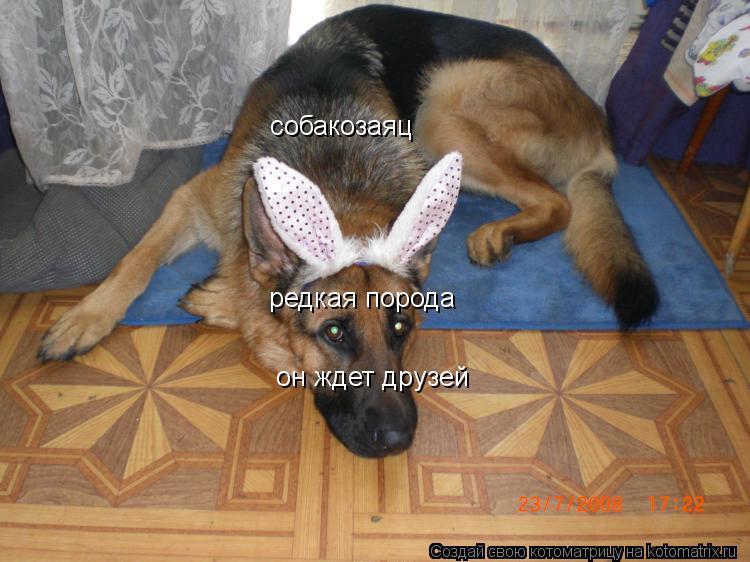Котоматрица: собакозаяц  редкая порода он ждет друзей