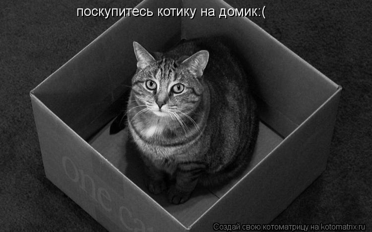 Котоматрица: поскупитесь котику на домик:(