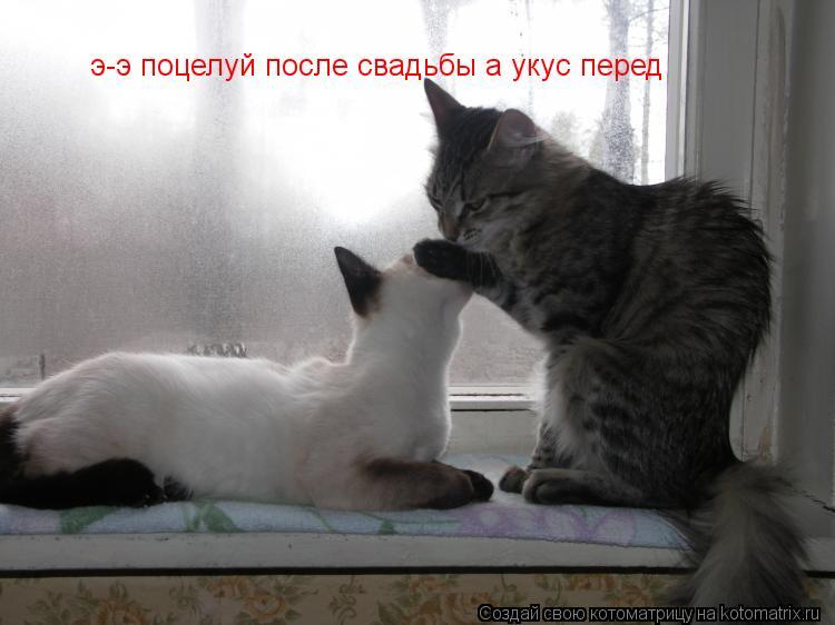 Котоматрица: э-э поцелуй после свадьбы а укус перед э-э поцелуй после свадьбы а укус перед