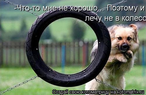 Котоматрица: -Что-то мне не хорошо... Поэтому и лечу не в колесо  лечу не в колесо