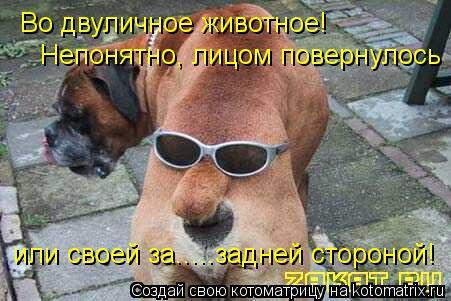 Котоматрица: Во двуличное животное! или своей за.....задней стороной! Непонятно, лицом повернулось