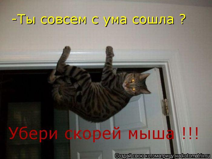 Котоматрица: -Ты совсем с ума сошла ? Убери скорей мыша !!!