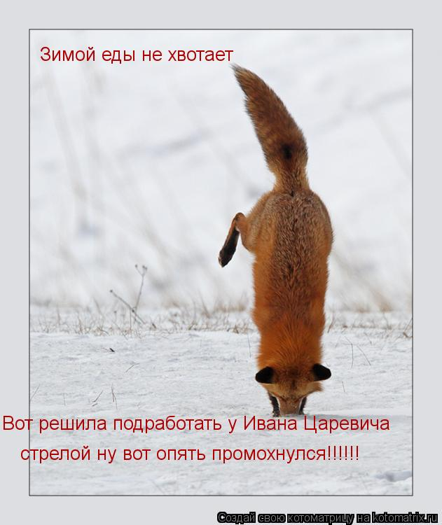 Котоматрица: Зимой еды не хвотает Вот решила подработать у Ивана Царевича стрелой ну вот опять промохнулся!!!!!!
