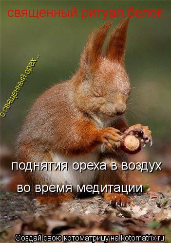 Котоматрица: священный ритуал белок: поднятия ореха в воздух во время медитации о священный орех...