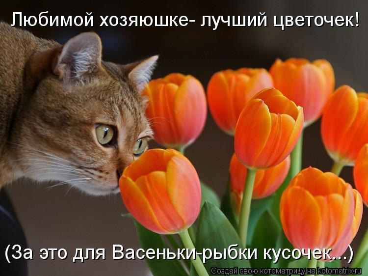 Котоматрица: Любимой хозяюшке- лучший цветочек! (За это для Васеньки-рыбки кусочек...)