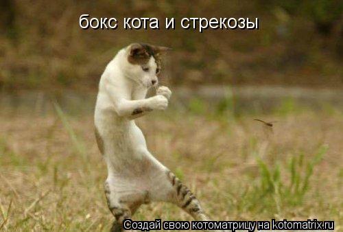 Котоматрица: бокс кота и стрекозы