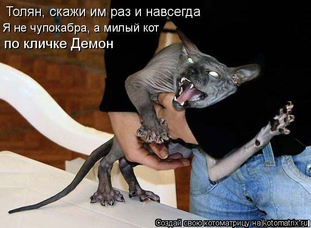 Котоматрица: Толян, скажи им раз и навсегда Я не чупокабра, а милый кот  по кличке Демон
