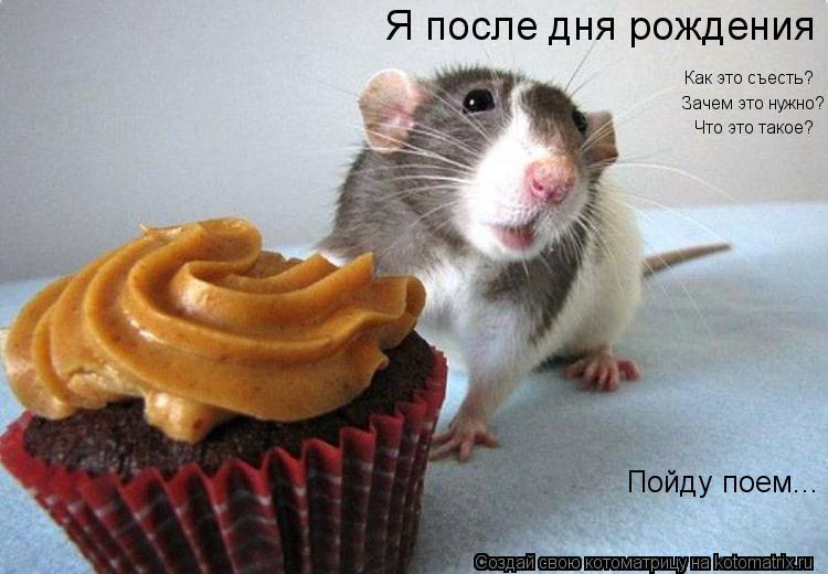 Котоматрица: Я после дня рождения  Как это съесть?  Зачем это нужно? Что это такое? Пойду поем...