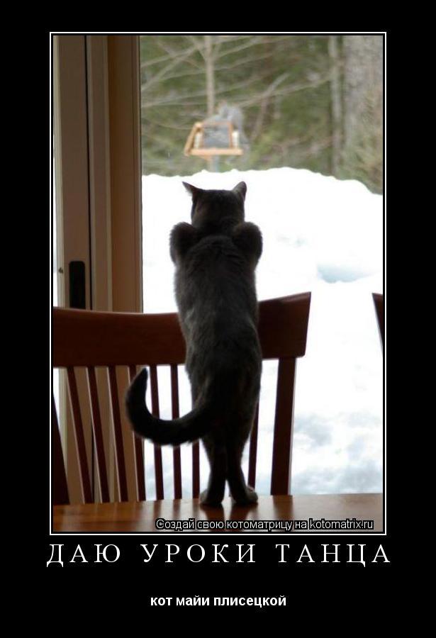 Котоматрица: Даю уроки танца кот майи плисецкой