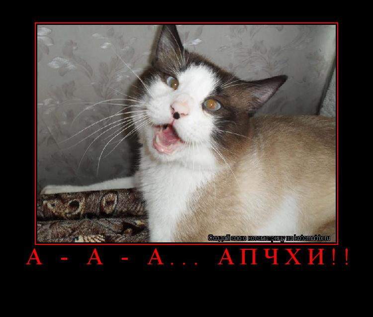 Котоматрица: А - а - а... Апчхи!!