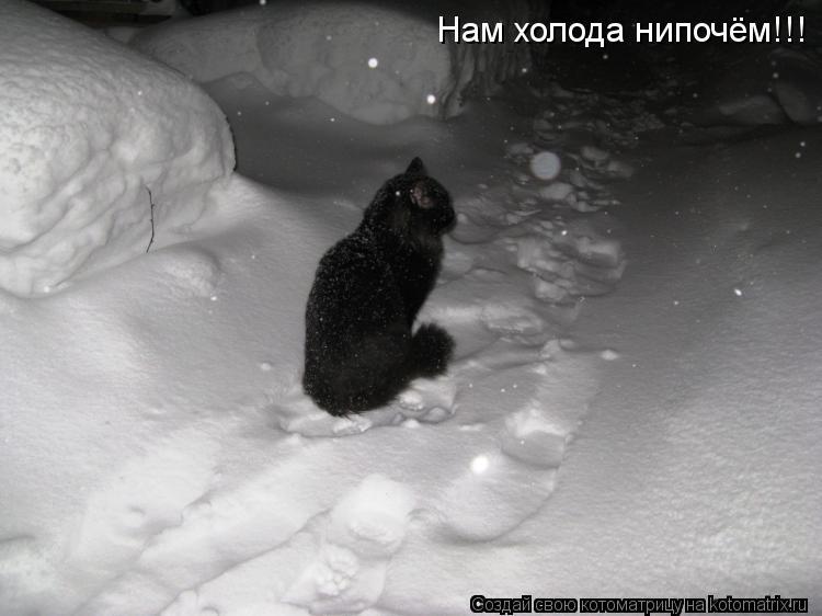 Котоматрица: Нам холода нипочём!!!