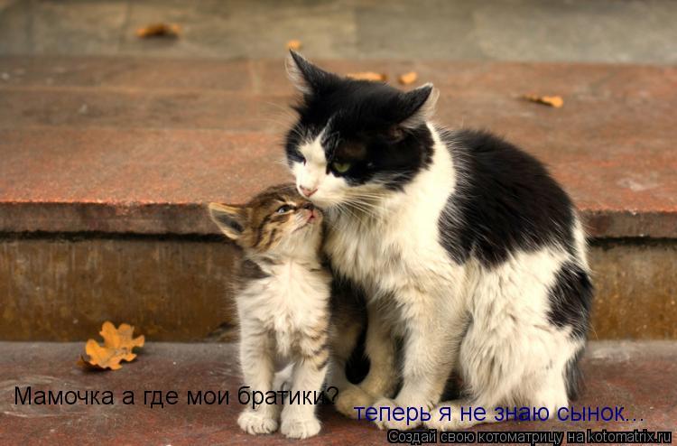 Котоматрица: Мамочка а где мои братики? теперь я не знаю сынок...