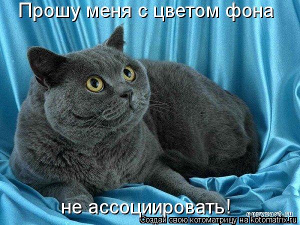 Котоматрица: Прошу меня с цветом фона не ассоциировать!