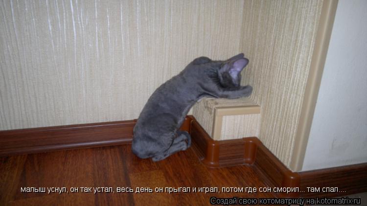 Котоматрица: малыш уснул, он так устал, весь день он прыгал и играл, потом где сон сморил... там спал....