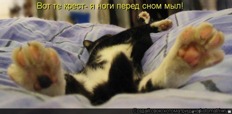 Котоматрица: Вот те крест- я ноги перед сном мыл!