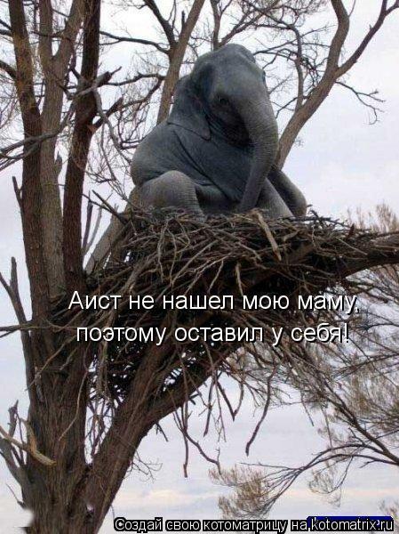 Котоматрица: Аист не нашел мою маму, поэтому оставил у себя!