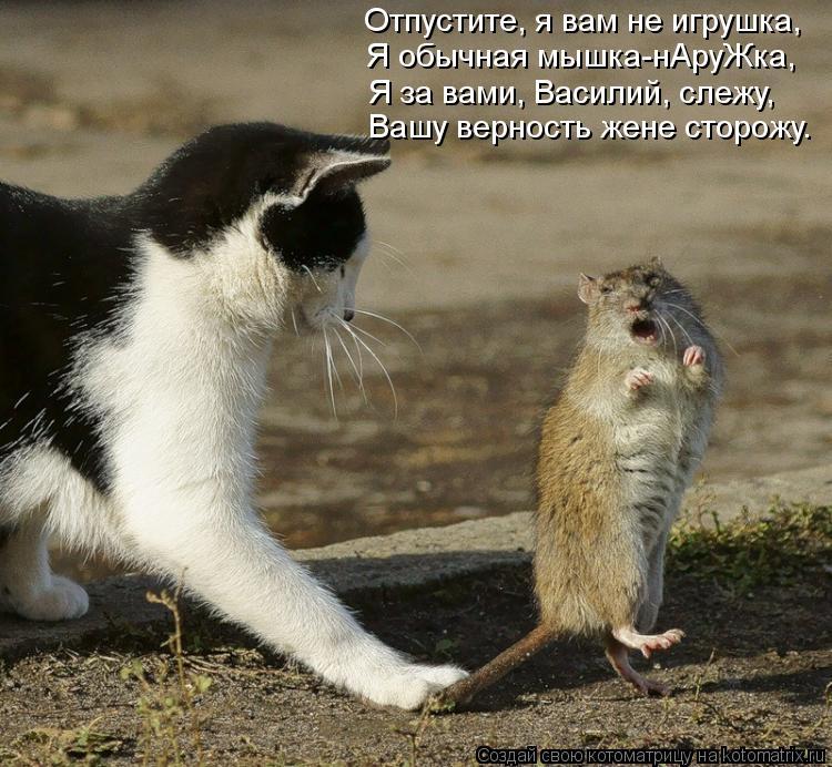Котоматрица: Отпустите, я вам не игрушка, Я обычная мышка-нАруЖка, Я за вами, Василий, слежу, Вашу верность жене сторожу.