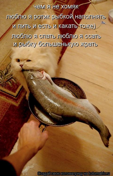 Котоматрица: чем я не хомяк люблю я ротик рыбкой наполнять и пить и есть и какать тоже) люблю я спать люблю я ссать и рыбку большенькую жрать