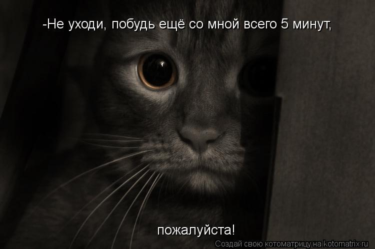 Котоматрица: -Не уходи, побудь ещё со мной всего 5 минут, пожалуйста!