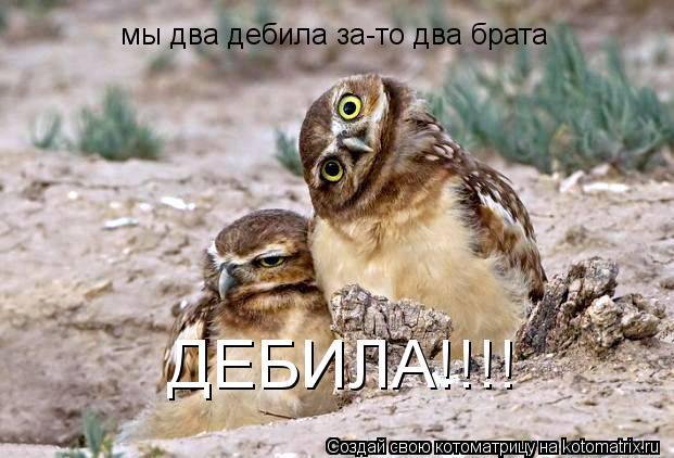 Котоматрица: мы два дебила за-то два брата ДЕБИЛА!!!!