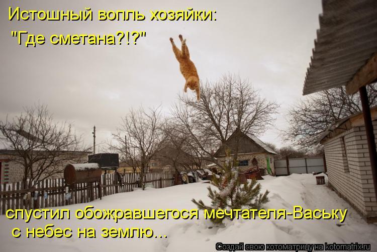 """Котоматрица: Истошный вопль хозяйки: """"Где сметана?!?"""" с небес на землю... спустил обожравшегося мечтателя-Ваську"""