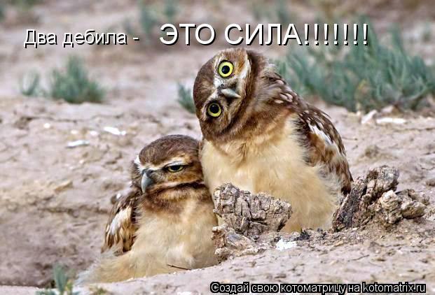 Котоматрица: Два дебила - ЭТО СИЛА!!!!!!!