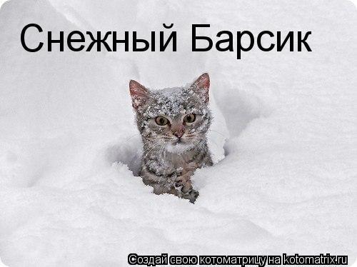 Котоматрица: Снежный Барсик