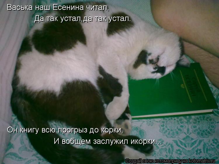 Котоматрица: Васька наш Есенина читал, Да так устал,да так устал. Он книгу всю прогрыз до корки, И вобщем заслужил икорки...