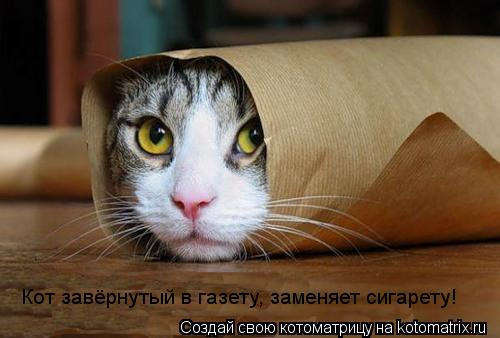 Котоматрица: Кот завёрнутый в газету, заменяет сигарету!