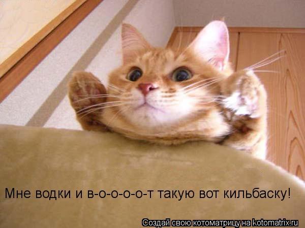 Котоматрица: Мне водки и в-о-о-о-о-т такую вот кильбаску!