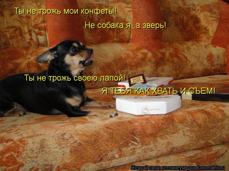 Котоматрица: Ты не трожь мои конфеты! Ты не трожь мои конфеты! Не собака я ,а зверь! Ты не трожь своею лапой! Я ТЕБЯ КАК ХВАТЬ И СЪЕМ!