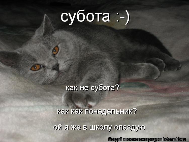 Котоматрица: субота :-) как не субота? как как понедельник? ой я же в школу опаздую