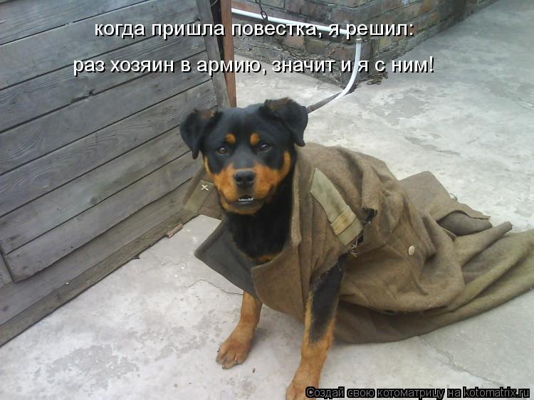 Котоматрица: когда пришла повестка, я решил:  раз хозяин в армию, значит и я с ним!