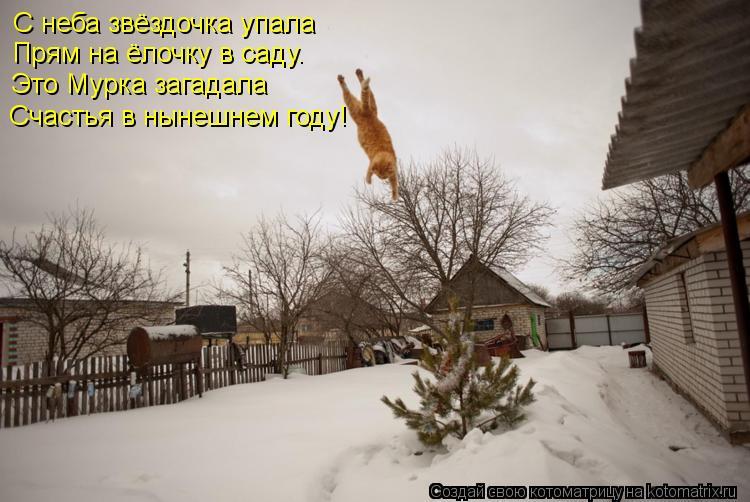 Котоматрица: С неба звёздочка упала Прям на ёлочку в саду. Это Мурка загадала Счастья в нынешнем году!