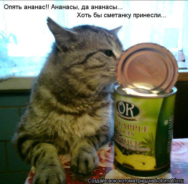 Котоматрица: Опять ананас!! Ананасы, да ананасы... Хоть бы сметанку принесли...